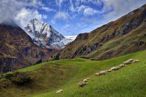 Anche la transumanza, patrimonio dell'Appennino e delle Alpi, nel patrimonio dell'UNESCO