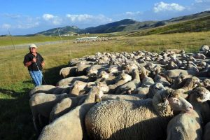 Transumanza e alpinismo nel patrimonio culturale Unesco